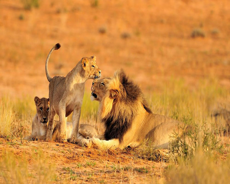 Wildlife Safaris Package Holidays
